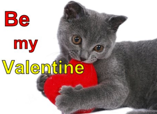 Be mine kitty